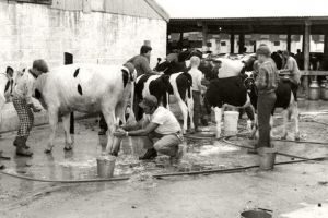 Cowtown Livestock Auction Preparations