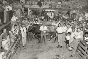 Cowtown Livestock Auction